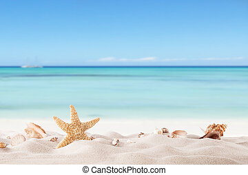 nyár, tengerpart, strafish, látszat