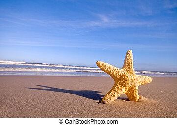 nyár, tengerpart, tengeri csillag