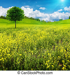 nyár, természetes, kaszáló, szépség, elvont, fa, egyedül, táj