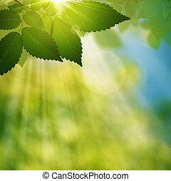 nyár, természetes szépség, elvont, háttér, erdő, nap