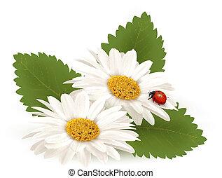 nyár, virág, illustration., természet, vektor, ladybug., százszorszép