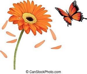 nyár, virág, illustration., természet, vektor, narancs, butterfly.