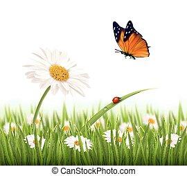 nyár, virág, illustration., természet, vektor, százszorszép, butterfly.