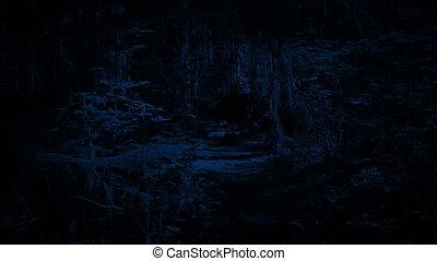 nyom, gyalogló, erdő, éjszaka
