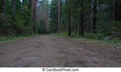 nyom, video, erdő