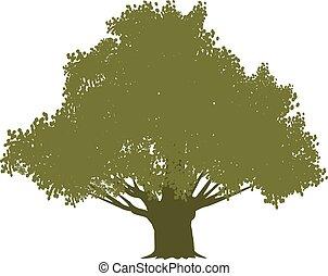 olajbogyó, elszigetelt, fehér, fa
