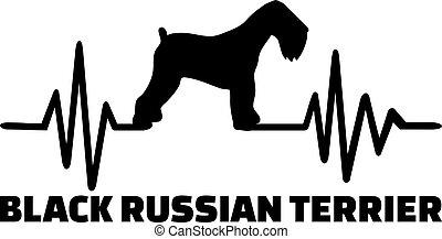 orosz, fekete, terrier, szó, szívdobbanás