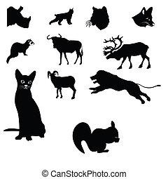oroszlán, gnú, havasi kecske, orrszarvú, macska, squi, majom, cérnaszalag, karibu