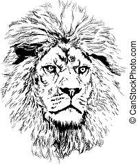 oroszlán, nagy, sörény