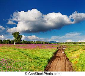 ország, virágzás, út, mező