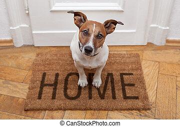 otthon, fogadtatás, kutya