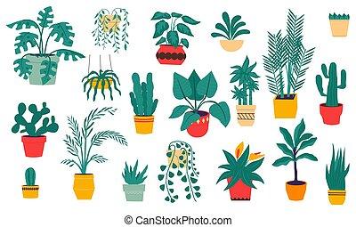 otthon, szobai, cactus., dezertál, kéz, tropikus, kerámiai, húzott, menstruáció, vektor, plants., leveses, állhatatos, monstera., pots., horgonykapák, elszigetelt, örökzöld, dekoráció, épület, ficuses, belső