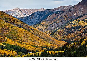 ouray, nyárfa colorado, felül, erdők