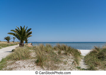 pálma, ólmozás, út, frederikshavn, tengerpart, homokos