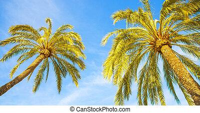 pálma fa, kék ég