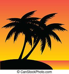 pálma fa