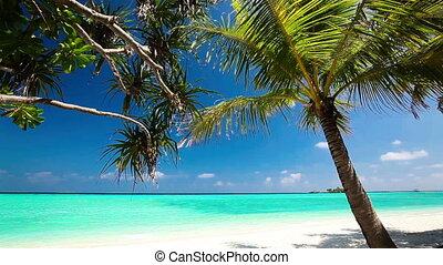 pálma, felett, lagúna, tropikus, bitófák