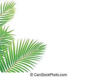 pálma, keret, fa, háttér