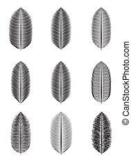 pálma, vektor, levél növényen, elszigetelt, ábra