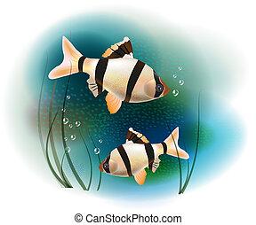 párosít, fish, tenger