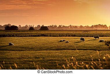 pásztori, napkelte, holland