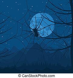 pók, éjszaka