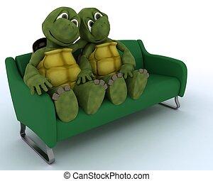 pamlag, teknősbéka
