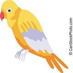 papagáj, mód, ikon, állatkert, isometric
