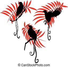 paradicsom, ábra, madár, állhatatos, vektor, árnykép