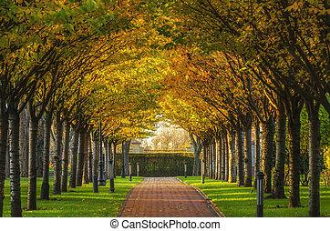 park., ősz, napos, fasor