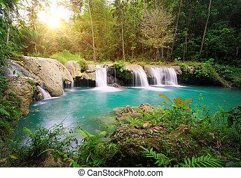 park., mély, vízesés, nemzeti erdő