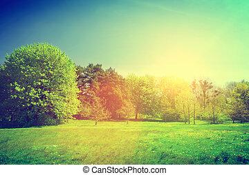 parkosít., nyár, napos, zöld, szüret