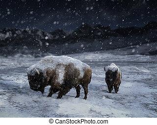 parkosít., tél, két, vakolás, bölény, méltóságteljes, 3