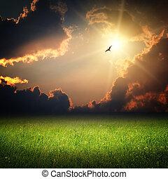 parkosít., varázslatos, ég, képzelet, napnyugta, madár