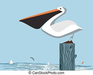 pelikán, ég, háttér