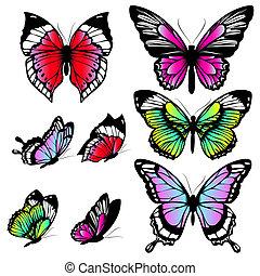 pillangók, szín, elszigetelt, fehér