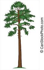 pine-tree, vektor