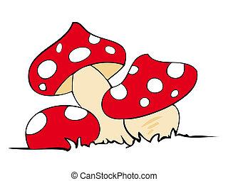 piros, megmérgez, mushrooms.