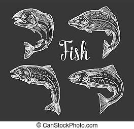 pisztráng, skicc, lazac, fish