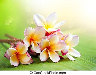 plumeria, tropikus, flower., ásványvízforrás, frangipani
