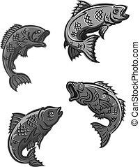 ponty, fish, sügér, basszus