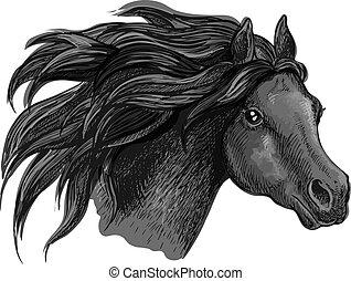 portré, amerikai félvad ló, black ló, skicc