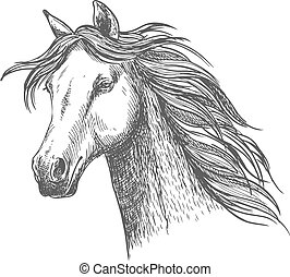portré, elegáns, ló, fehér, sörény, skicc