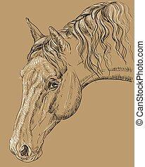 portré, háttér, ló, barna