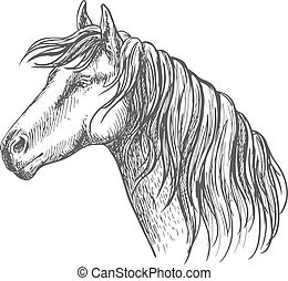 portré, ló, fehér, sörény, skicc, mentén, nyak