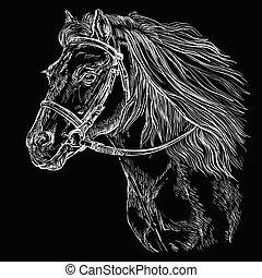 portré, ló, fekete, 21