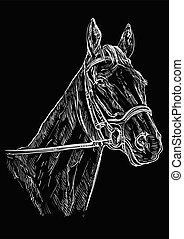 portré, ló, fekete, 22