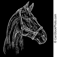 portré, ló, fekete, 27