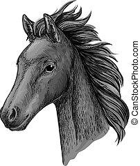 portré, ló, fekete, fej, skicc