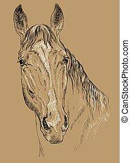 portré, ló, háttér, barna